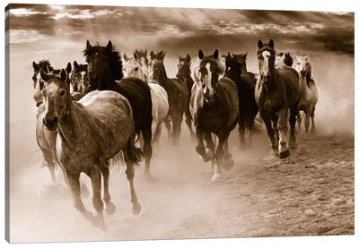 Running Horses Canvas Art Print