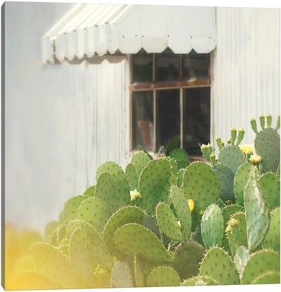 Cactus And Window Canvas Art Print