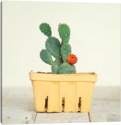 Cactus In Crate III Canvas Art Print