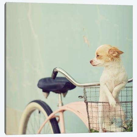 Dog On Pink Bike Square Canvas Print #MND15} by Mandy Lynne Canvas Art Print