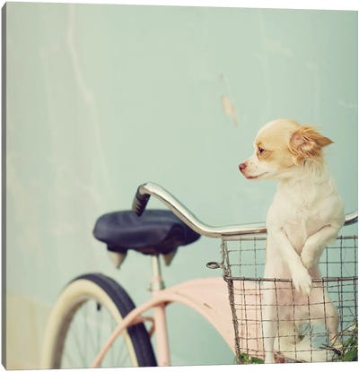 Dog On Pink Bike Square Canvas Art Print