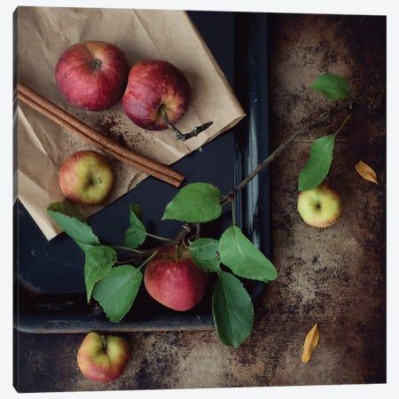 Apples Canvas Print #MND1} by Mandy Lynne Canvas Artwork