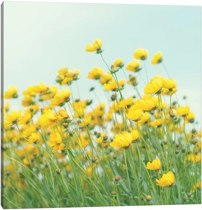 Field Of Yellow Flowers Crop Canvas Art Print