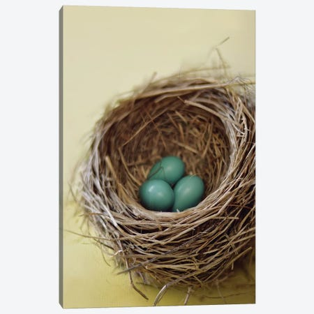 Nest 3-Piece Canvas #MND36} by Mandy Lynne Art Print