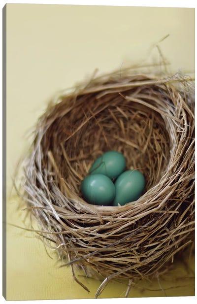 Nest Canvas Art Print
