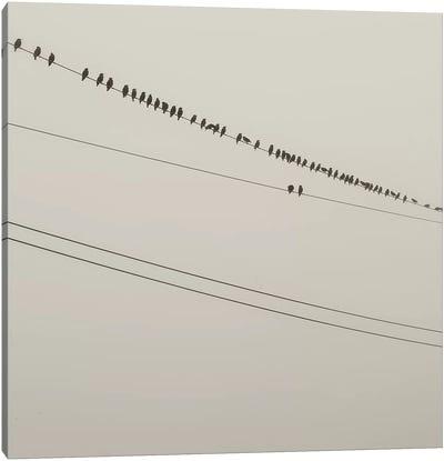 Birds On A Wire Canvas Art Print
