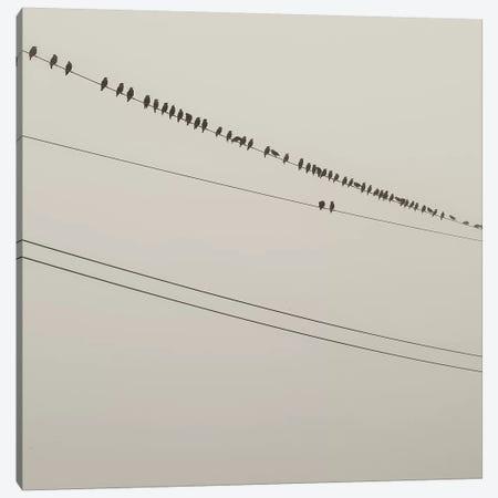 Birds On A Wire Canvas Print #MND7} by Mandy Lynne Canvas Print