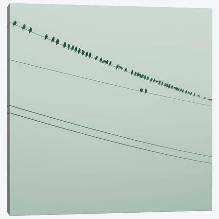 Birds On A Wire Green Canvas Print #MND8} by Mandy Lynne Canvas Art