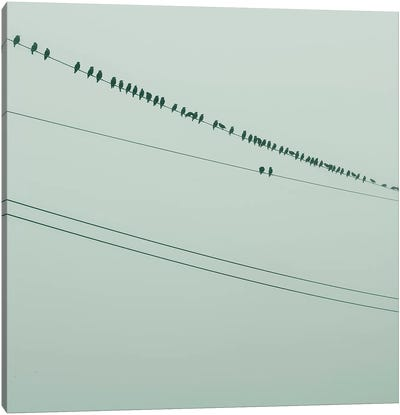 Birds On A Wire Green Canvas Art Print