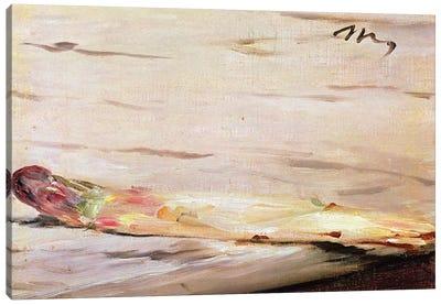 Asparagus, 1880 Canvas Art Print