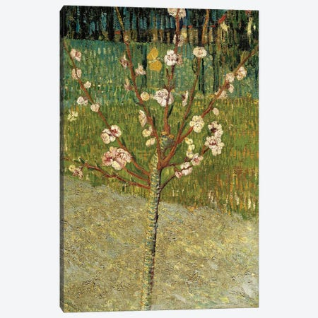Almond Tree in Blossom, 1888 Canvas Print #MNE66} by Vincent van Gogh Art Print