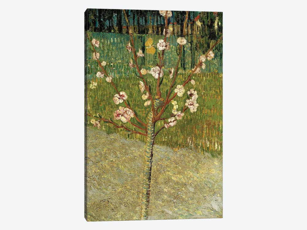 Almond Tree in Blossom, 1888 by Vincent van Gogh 1-piece Canvas Art