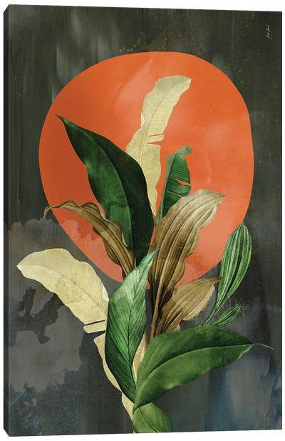 Abstract Color XXIX Canvas Art Print