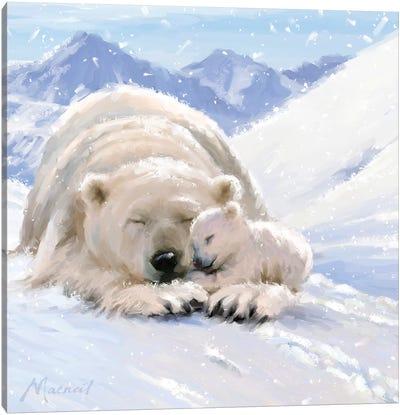 Bearcub Square Canvas Art Print