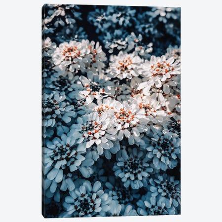 Flowers Canvas Print #MNU104} by Manuel Luces Canvas Art Print