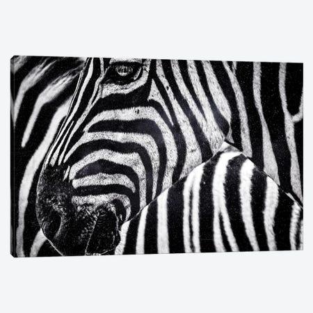 Zebra Canvas Print #MNU116} by Manuel Luces Canvas Art