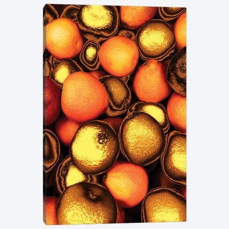 Golden Oranges Canvas Print #MNU36} by Manuel Luces Canvas Art