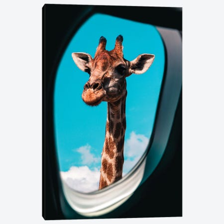 Hi There Canvas Print #MNU40} by Manuel Luces Canvas Art