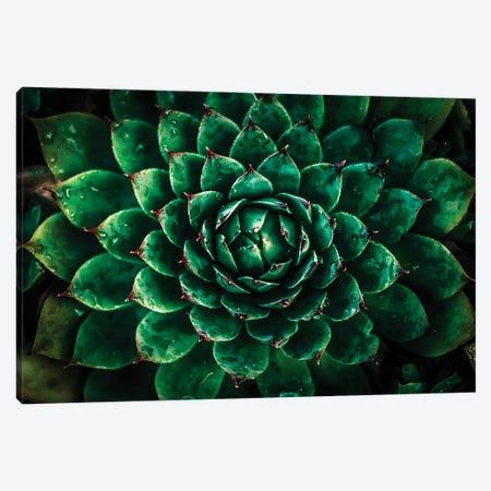 Green Canvas Print #MNU83} by Manuel Luces Canvas Art