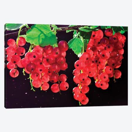 Berrys Canvas Print #MNU92} by Manuel Luces Canvas Art Print