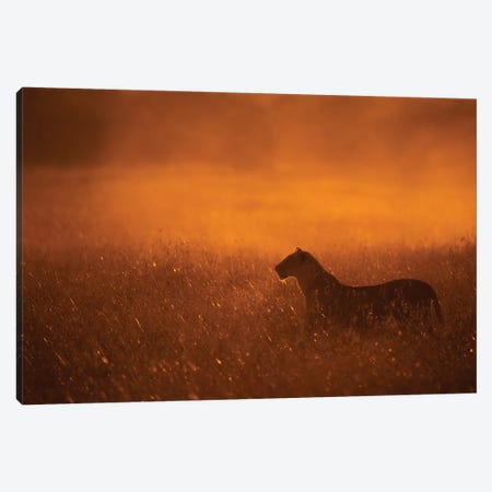 Gold Dust Canvas Print #MOA11} by Mohammed Alnaser Canvas Art