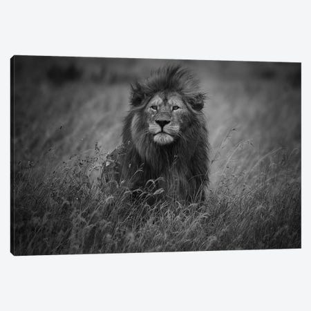 Lion King Canvas Print #MOA12} by Mohammed Alnaser Canvas Artwork