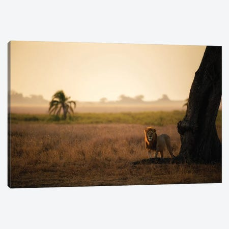 Palm Tree King Canvas Print #MOA16} by Mohammed Alnaser Art Print