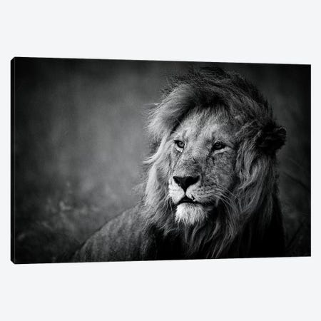 Regal Canvas Print #MOA3} by Mohammed Alnaser Canvas Artwork