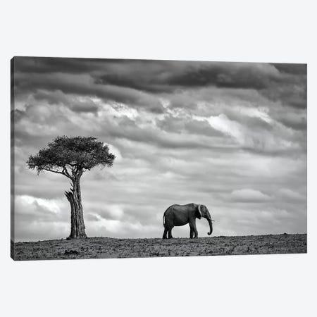 Elephant Landscape Canvas Print #MOE1} by Mario Moreno Canvas Art