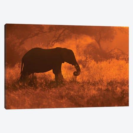 Golden Elephant In Savute Canvas Print #MOE2} by Mario Moreno Canvas Artwork