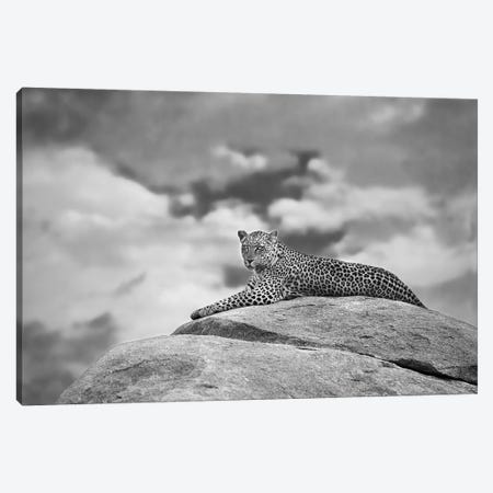 Leopard On A Kopje Canvas Print #MOE3} by Mario Moreno Canvas Wall Art