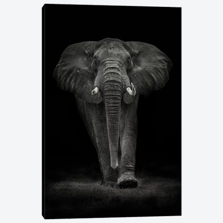 Ngorongoro Bull Canvas Print #MOE4} by Mario Moreno Art Print