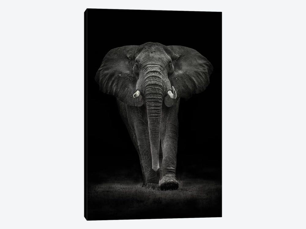 Ngorongoro Bull by Mario Moreno 1-piece Canvas Art Print