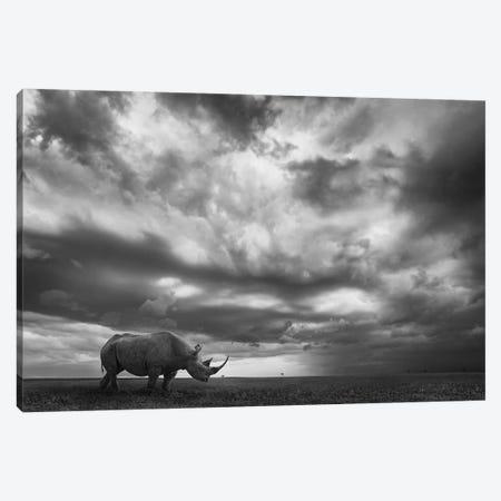 Rhino Land Canvas Print #MOE5} by Mario Moreno Canvas Art Print