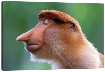 Proboscis Monkey The Inner World Canvas Art Print