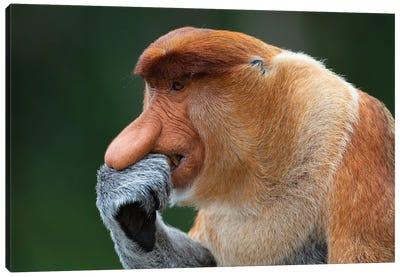 Proboscis Monkey The Thinker Canvas Art Print