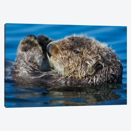 Sea Otter California Canvas Print #MOG105} by Mogens Trolle Canvas Art Print