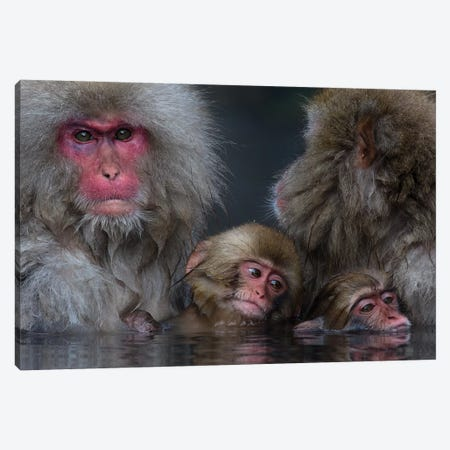 Snow Monkey Familiy In Hotspring Canvas Print #MOG109} by Mogens Trolle Canvas Wall Art