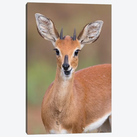 Steenbok Canvas Print #MOG114} by Mogens Trolle Canvas Art