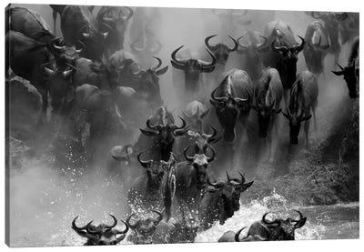 Wildebeest Crossing by Mogens Trolle Canvas Art Print