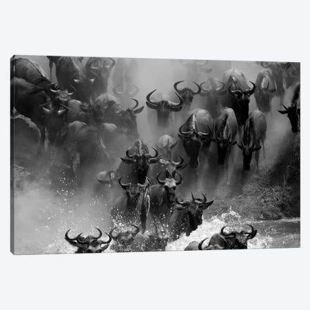 Wildebeest Crossing Canvas Print #MOG120} by Mogens Trolle Canvas Wall Art