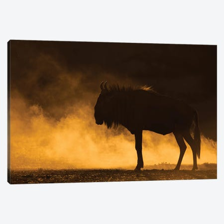 Wildebeest Kicking Up Dust Kalahari Canvas Print #MOG121} by Mogens Trolle Canvas Art