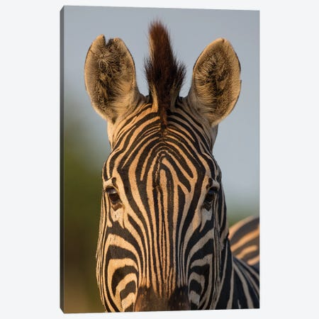 Zebra Facial Pattern South Africa Canvas Print #MOG122} by Mogens Trolle Canvas Wall Art