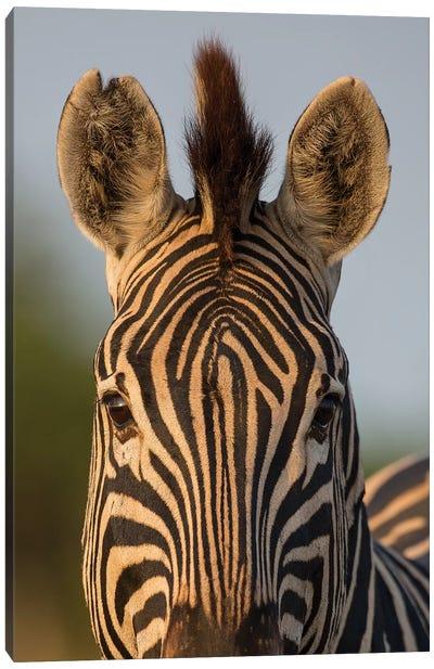 Zebra Facial Pattern South Africa Canvas Art Print