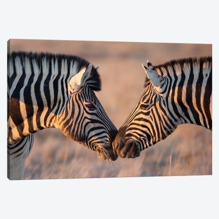 Zebra Kiss Canvas Print #MOG123} by Mogens Trolle Canvas Art