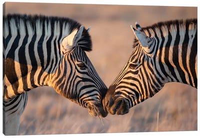 Zebra Kiss Canvas Art Print