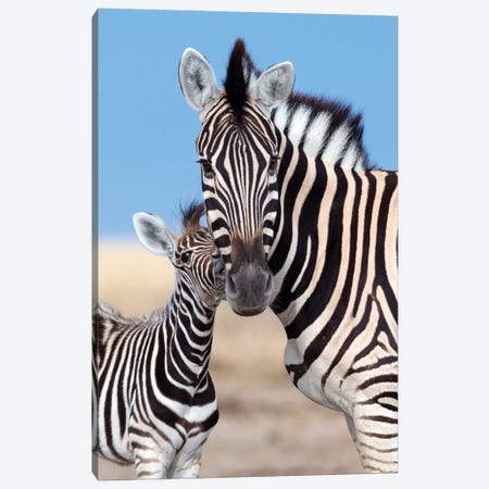 Zebra Mother And Foal Canvas Print #MOG124} by Mogens Trolle Canvas Art Print