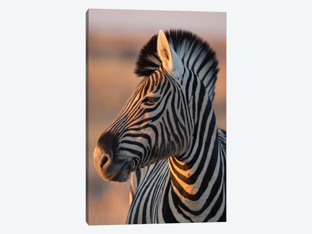 Zebra Stallion Sunset Light by Mogens Trolle 1-piece Canvas Wall Art