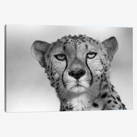 Cheetah Eye Contact Canvas Print #MOG17} by Mogens Trolle Canvas Print
