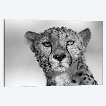 Cheetah Eye Contact Canvas Print #MOG17} by Mogens Trolle Canvas Print